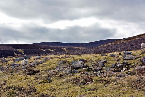 Glen Dye hills