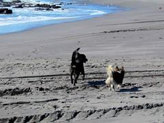 PERRITOS PLAYEROS (Pablo C.M || BANCOIMAGENES.CL) Tags: chile dog animal playa perro amistad maule loanco santosdelmar lipigash