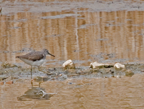 Flickr: Wading Birds UK
