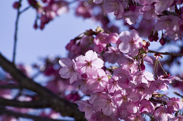 2011年日本の春