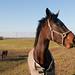 Portret van een paard - Portrait of a horse