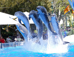 Horizons (CetusCetus) Tags: world show blue sea orlando florida dolphin group dolphins bow seaworld shamu parrots macaws horizons bottlenose