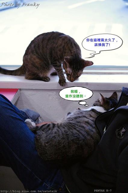 台北‧貓館