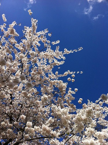 Blue sky and blooms