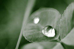 water drop (Passion Creations) Tags: macro canon garden 50mm ring 7d reverse