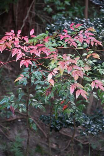 色づく春 / Plant in the garden