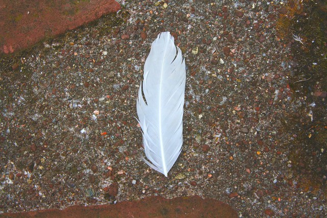 signs of life: a feather