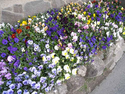 春の花々@明日香村-27