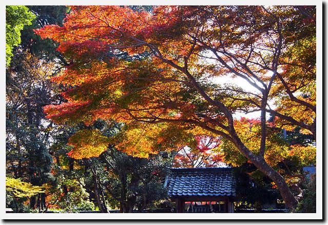 20101120_133024_吉野山_吉水神社