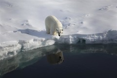 We must protect the Arctic (Greenpeace UK) Tags: ice beauty outdoors day glaciers copyspace polarbears glaciermelt climatechangeimpacts climatecampaigntitle