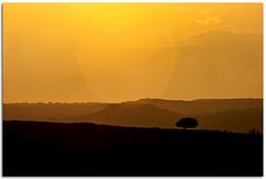 (Antonio Carrillo (Ancalop)) Tags: sunset espaa mountain tree field canon arbol atardecer spain europa europe horizon andalucia campo lopez antonio almeria carrillo horizonte montaas 70200mm 50d ancalop 70200usmf4