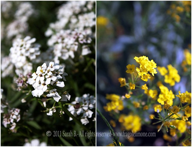 Collage fiori 6edited