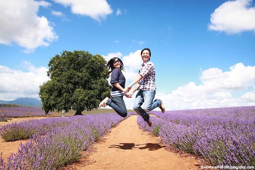 Bridestowe Lavender Farm