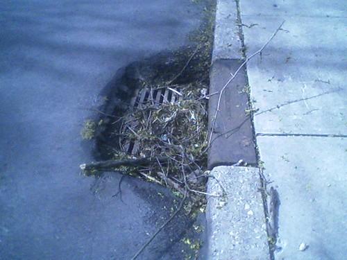 Steuben St drain grates, #4 of 6