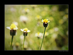 Love story of three! (e.nhan) Tags: flowers light flower art nature leaves yellow closeup landscape colorful colours shadows dof bokeh arts backlighting enhan
