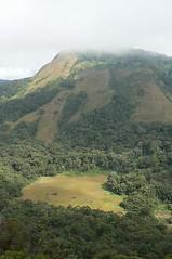 Manho forest - Mt. Namuli, Mozambique