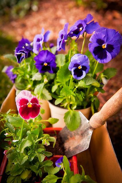 04.21.11 Gardening-55-Edit-3.jpg