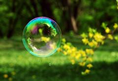 Bubble (elise.kurenbina) Tags: summer green nature nikon bubble