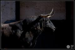 carriquiri-8 (Manon71) Tags: bulls toros corrales bullfight lasventas carriquiri
