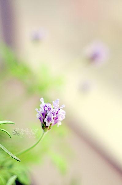 紫色小精靈