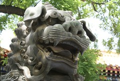 Magnificent Chinese lions