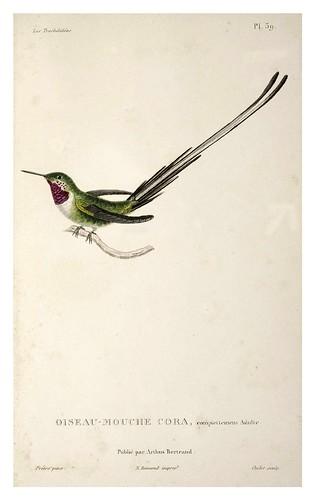026-Les Trochilidées ou les Colibris et les Oiseaux-Mouches… 1832- René Primevère Lesson- DGZ–Göttinger Digitalisierungszentrum
