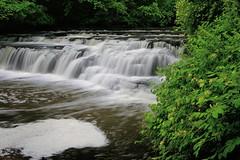 Honeysuckle At The Falls (+David+) Tags: wet waterfall honeysuckle corbettsglen postcardfalls