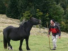 Cheval de Mérens