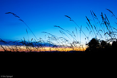 Sunset Through the Tall Grass (Eric Spiegel) Tags: travel blue sunset sky plants color grass silhouette clouds digital rural landscape outside outdoors virginia dusk farm scenic wideangle tokina ultrawide travelphotography nikond80 ruckersville doverfoxcroftfarm