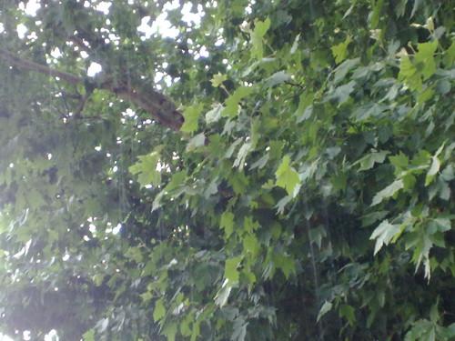 Goccie sulle foglie by durishti
