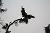 Solstice 2011 (Sok Cinema) Tags: solstice yukon arcticcircle eagleplains