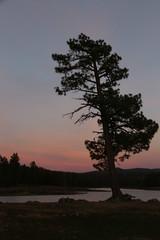 Sunset at Hawley Lake (lars hammar) Tags: whitemountains hawleylake arizona lake sunset tree