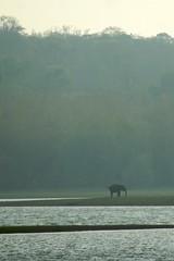elephant in Nagarhole national park (LaylaLee) Tags: park india national gandhi karnataka rajiv