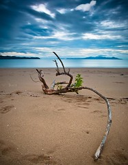 Wishbone (PhotoByTrace) Tags: debris australia queensland cape townsville pallarenda