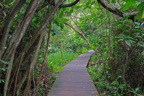 tablas en la selva