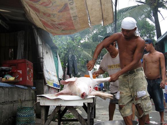 Butchering a Pig in Payatas