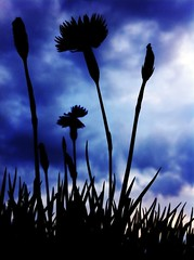 Ambiguous Beauty (oscarrivera104) Tags: flowers dark store mysterious iphone