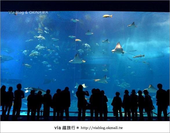 【沖繩景點】美麗海水族館~帶你欣賞美麗又浪漫的海底世界!21