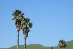 Palms and Hills by Dowbiggin