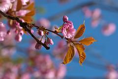 Spring (Q-BEE) Tags: nature spring natur cologne köln sonne koeln frühling fruehling