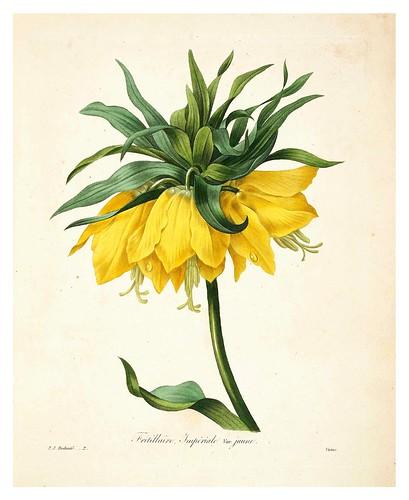 001-Corona Imperial-Choix des plus belles fleurs…1827- P.J.Redoute