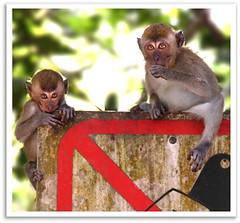 Monkey stock photography (Kenny Teo (zoompict)) Tags: light wild cute beautiful animal forest wonderful zoo monkey photo yahoo google photographer expression small getty kenny facial zoompict singaporelowerpiercereservoir
