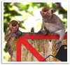 Monkey stock photography (Kenny Teo (zoompict)) Tags: light wild cute beautiful animal forest wonderful zoo monkey photo yahoo google photographer expression small getty kenny facial zoompict singaporelowerpiercereservoir