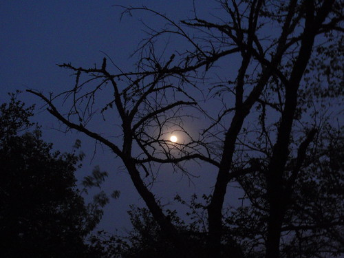 Moonlight and Branches