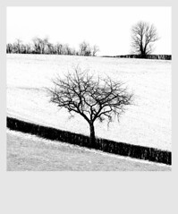 Nature Tranquille   *** (Vancayzeele Olivier) Tags: winter blackandwhite bw snow france tree noiretblanc hiver neige arbre franais camerabag creuse oltusfotos sermur vancayzeele