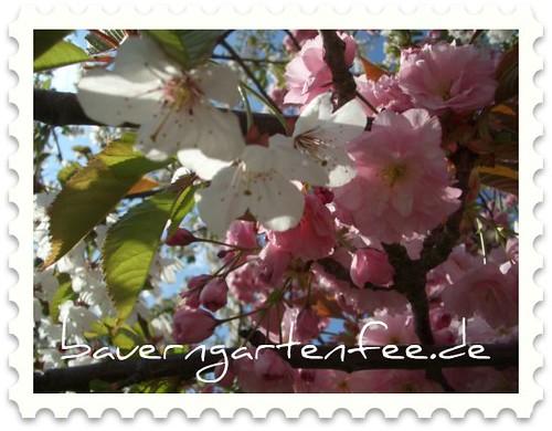 Zweifarbiger Obstbaum