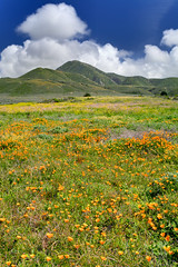 California Spring (Jay Tankersley Photography) Tags: california county spring san poppy poppies luis wildflower obispo