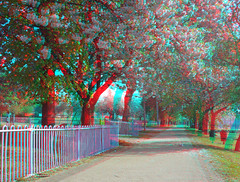 Hyper Stereo 0281 (XD3D) Tags: trees summer stereoscopic 3d spring anaglyph stereo bloom hyper xd blosum