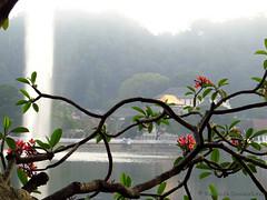Nature offers to temple of the tooth (Kavi's Photography) Tags: flowers lake water tooth temple buddha lord sri lanka sprout kandy dalada maligawa araliya bogumbara
