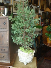 "Bonsai • <a style=""font-size:0.8em;"" href=""http://www.flickr.com/photos/51721355@N02/5638653317/"" target=""_blank"">View on Flickr</a>"